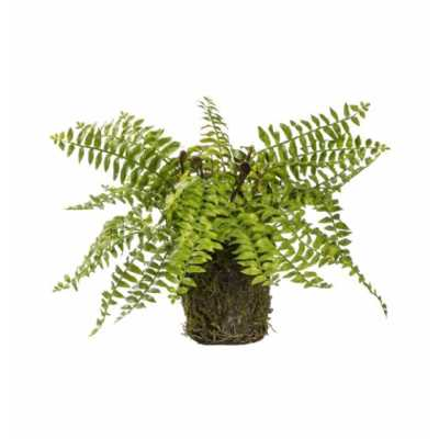 Fern with Soil